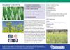 Biagro PhosN - Solubilise Phosphate- Brochure