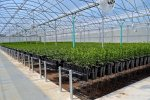 Shepherd Mesh for Greenhouse & Nursery Applications