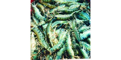 Shrimp Growout Feeds
