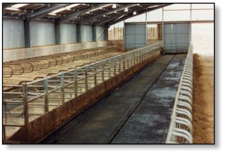 Cattle Handling Systems