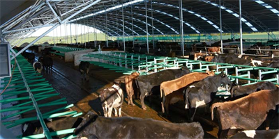 Free Stall Cow Barns