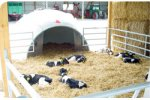 Igloo - Outdoor Housing Calves