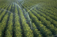 Identifying sustainable solutions for agricultural water useage