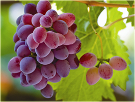 AKWinery - Winery Management System