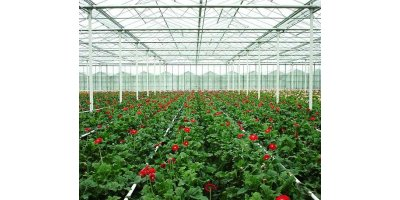 Low Profile Venlo Greenhouses