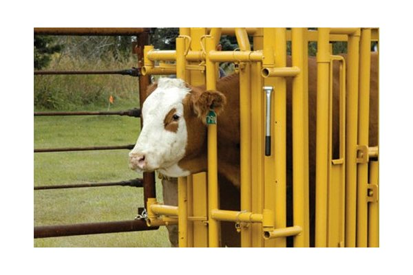Portable Cattle Handling System-4