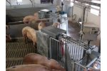 Insentec CompuFeeder - Group Housing Systems for the Modern Pig