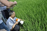 Rice Farmers in China use Less Fertilizer, Increase Yield