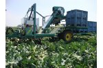 Baekelandt - Cauliflower Harvester