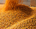 Plan-A-Head - Grain Management Software Program, Grain Management System