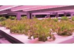 Priva - Indoor Growing Controlling System