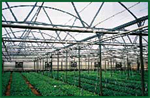 GreenZone - Greenhouse Structures