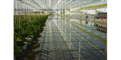 Prins - Model Venlo - Greenhouse
