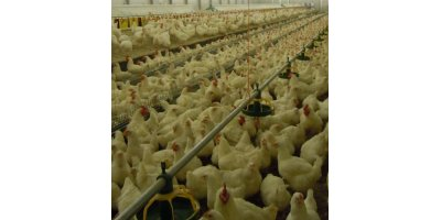 `The Crusher` - Model FE - Pan Poultry Feeding System for Male Breeders