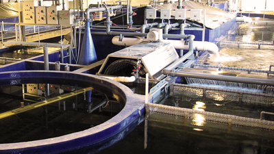 Fish Production Pool - Oval  Recirculating System / Fish Species