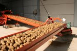 Double Potato Conveyor