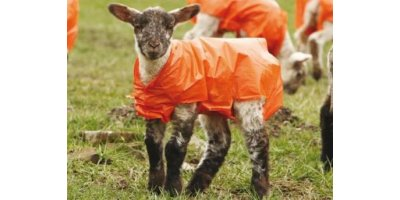 Lammac Lamb  - Polythene Jackets