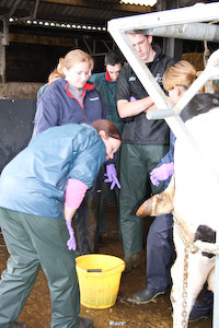 Transferring and Implanting Bovine Embryos Course
