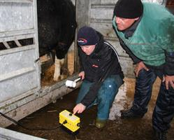 Bull Breeding Workshop