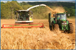 Harvest the Crop at the Correct Dry Matter
