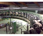 Study Highlights the Economic Impact of the Canadian Dairy Sector