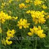 Model WFS330 - Wild Flower Seed Birdsfoot Trefoil