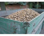What's your potato storage strategy?