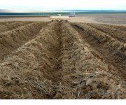 Don`t let weather affect your potato planting