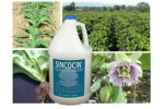 SINCOCIN - Plant Extracts and Fatty Acids