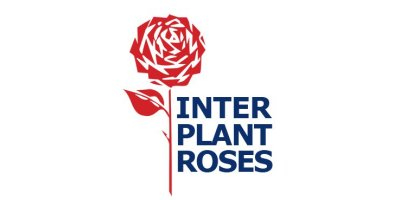 Interplant Roses