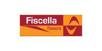 FISCELLA FLOWERS