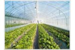 Nursery & Greenhouse Management Software