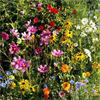 Gulf Coast Wildflower Seed Mix