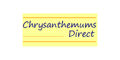 Chrysanthemums Direct