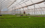 Agromax - Green Houses