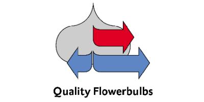 Stuifbergen Bulb Export, Inc.