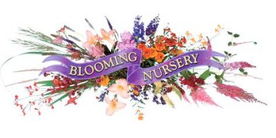 Blooming Nursery