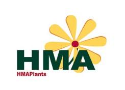 HMA Plants