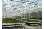 Continuous Vents Venlo Greenhouse