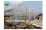 Plastic Film Multi-Span Greenhouse