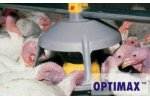 OPTIMAX - OPTIstart - Pan Feeding System for Heavy Turkeys