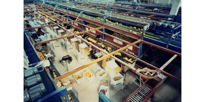 Fresh Citrus & Potato Processing Plants