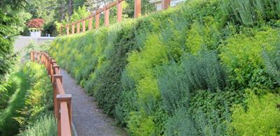 Vegetated Wall System-Landscaping