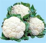 Green Seeds Co., Ltd - CAULIFLOWER F1 G45