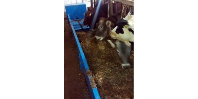 Cow Feeding Belt Conveyor