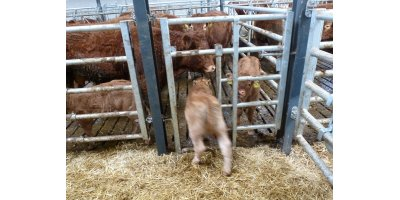 Calf Creep Gates