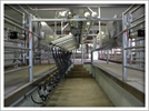 Eco-Stall Milking Parlor