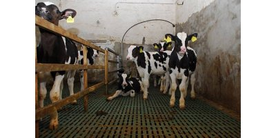 Trapper  - Plastic Flooring for Calves