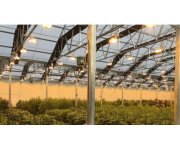How LED and HPS Lighting affects air and leaf temperature