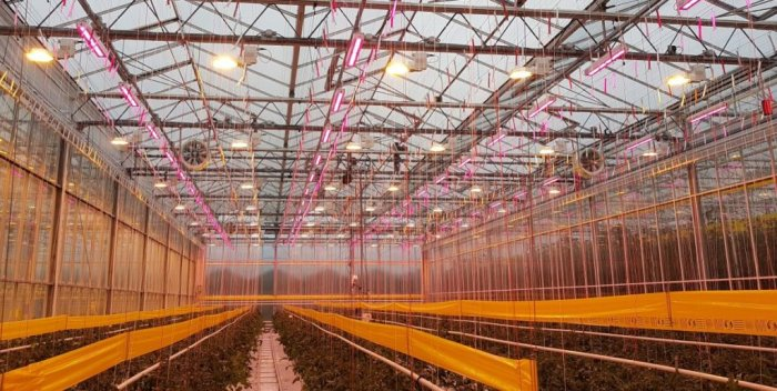 A hybrid installation allows the grower to take advantage of the diffuse light and radiant heating from the HPS luminaires during the winter months, while being able to turn on the LEDs in spring without having to heat up the greenhouse.